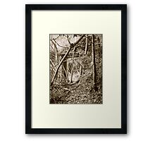 A Doorway to Nature Framed Print