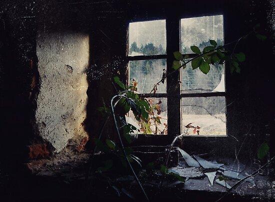 Window Of The Past by Mojca Savicki