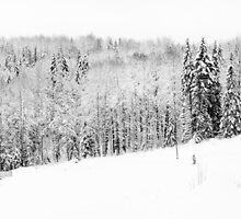 Winter forest by Sergey Martyushev
