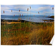 The Tall Sea Grass Poster