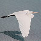 Delicate Wings In Flight by Deborah  Benoit