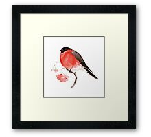 bullfinch Framed Print