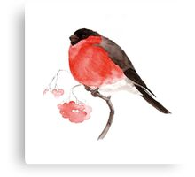 bullfinch Canvas Print