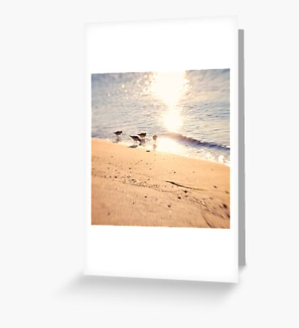 4 Little Birds Greeting Card