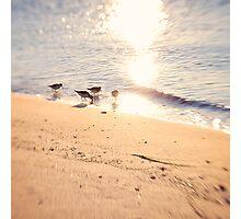 4 Little Birds Photographic Print