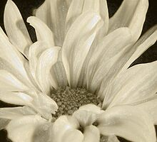 chrysanthemum with plaster wrap effect by Penny Rumbelow