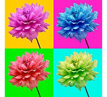 Dahlia Brightly Coloured Wall Art Photographic Print
