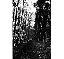Rural Path Photographic Print