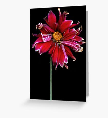 Flower - Bad hair day  Greeting Card