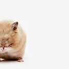 Sleepy Hamster by Andrew Bret Wallis