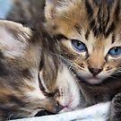Snuggle Buddies by RebeccaDaisey