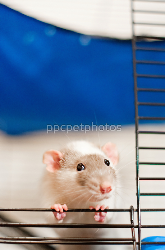 Begging for Popcorn by ppcpetphotos
