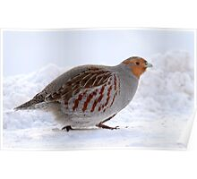 On The Move / Gray Partridge Poster