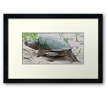 Egg Burier - Snapping Turtle Framed Print