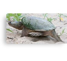 Egg Burier - Snapping Turtle Metal Print