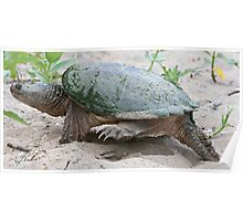 Egg Burier - Snapping Turtle Poster