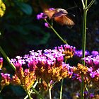 Flight of the Hummingbird Hawk Moth by Holly Daniels