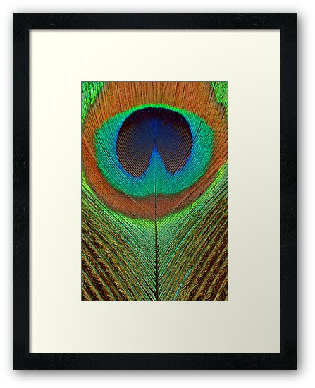 Animal - Bird - Peacock Feather by Mike  Savad