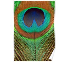 Animal - Bird - Peacock Feather Poster