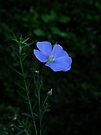 Violets are Blue by Themis