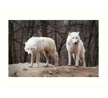 Two Arctic Wolves Art Print
