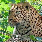 Leopard portrait by Tamara  Kaylor