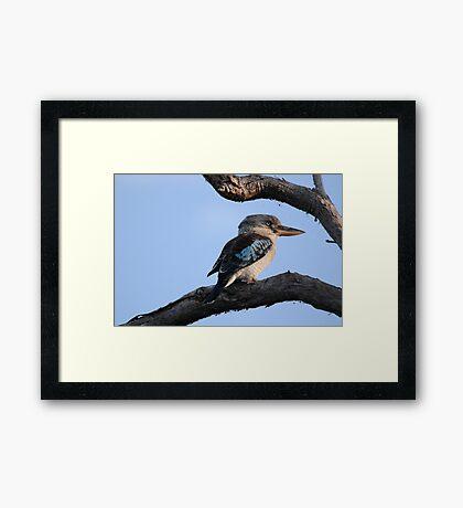 Morning Hunt Framed Print