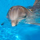 Bottlenose Dolphin by Tony Walton