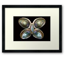 Shell - Conchology - Devine Pearlescence Framed Print
