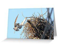 Nest Building Osprey Greeting Card