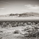 Magnificent Desolation by Steve Silverman