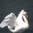 Mute Swan by NewfieKeith