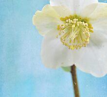 winter flower by Iris Lehnhardt