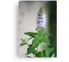Mint In Flower Canvas Print