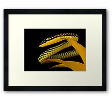 Flying Paradise snake Framed Print