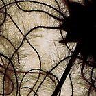 Dark Angel by elisabeth tainsh