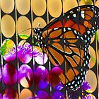 bubbles and butterfly by vigor