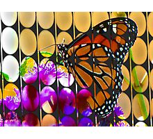 bubbles and butterfly Photographic Print