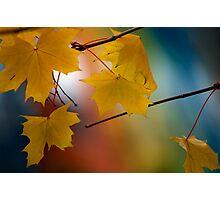 Seasons Change. Photographic Print