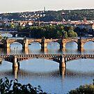 The Bridges of Prague by stjc