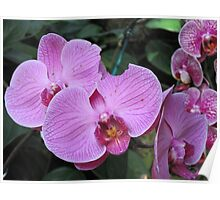 Passionate About Purple - Orchids Poster