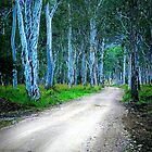 Booie Dirt Road by tracielouise