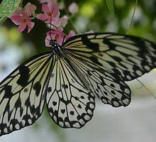 Butterfly Farm by Julian Lowry