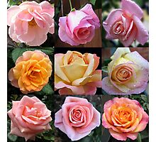 Rose Beauties Collage Photographic Print