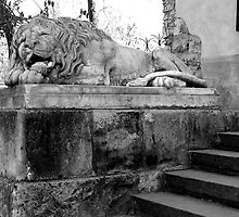 the slumbering lion by kchamula