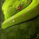 Green Tree Python by TinaGraphics