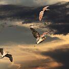 Noctural Herons by byronbackyard
