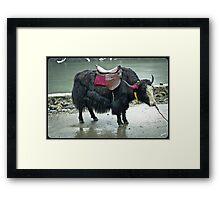 Yak, Sikkim Framed Print