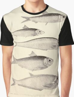 The fishes of India by Francis Day 163 - Clupea Oma Opisthopterus tartoor Russelliana_ Graphic T-Shirt