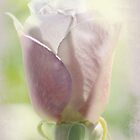 rose whispers by Teresa Pople